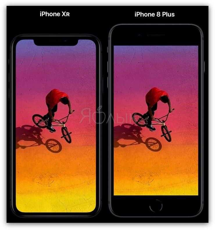 iphone 8 plus vs iphone xr